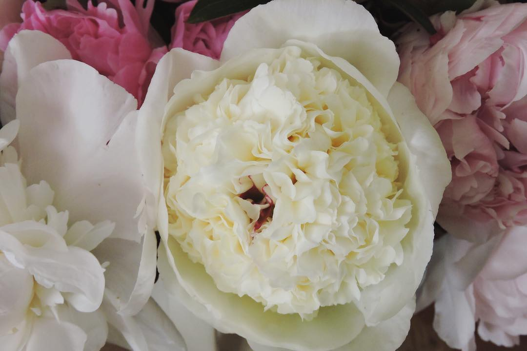 Peony season is on her way ??To avoid disappointment please Preorder at www.petalandpost.co.za — link in bio ?