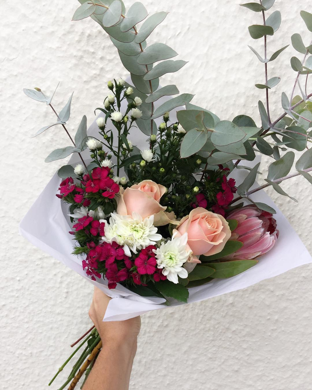 Today's Posy is Proteas and pearl roses with sweet William, daisies, sprays and penny gum 💕 Order online before 12:30pm for delivery today!