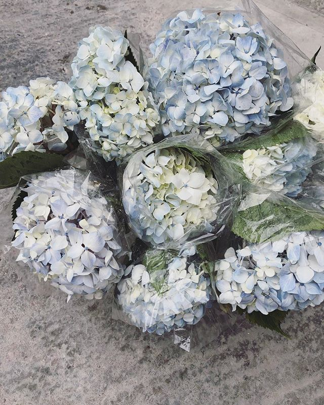 Beautiful sweet hydrangeas have arrived 😌 Look out for them in Today's Posy. . . . #Petalandpost#capetown#capetownflorist#lovezabuyza#localzadesign#lovelocalza#hellopretty#capetownmag#cylcollective #capetownlikes#supportlocal#posylove#wedding#local#botanical#theprettyblog#gardenday#capetowninfo#handmadeincapetown#madeinsouthafrica#lokalza#durbanville#proudlysouthafrican